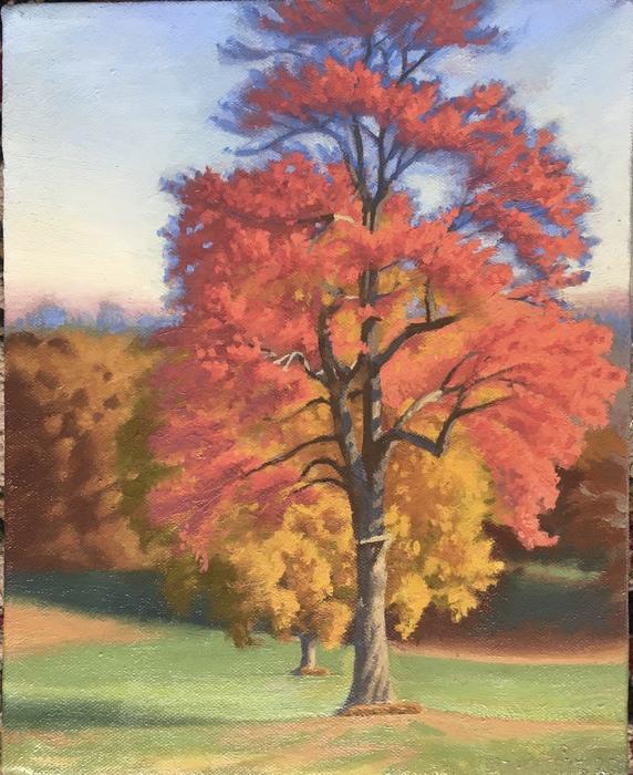 Sunny Trees, Larz Morning