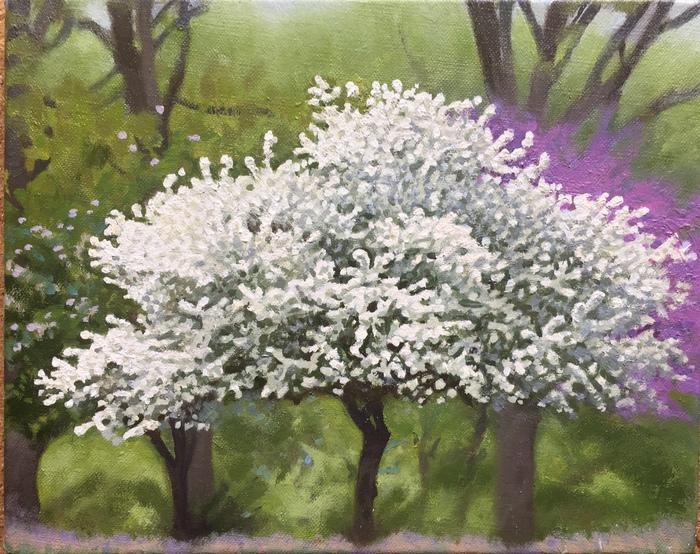White Tree, the Fenway