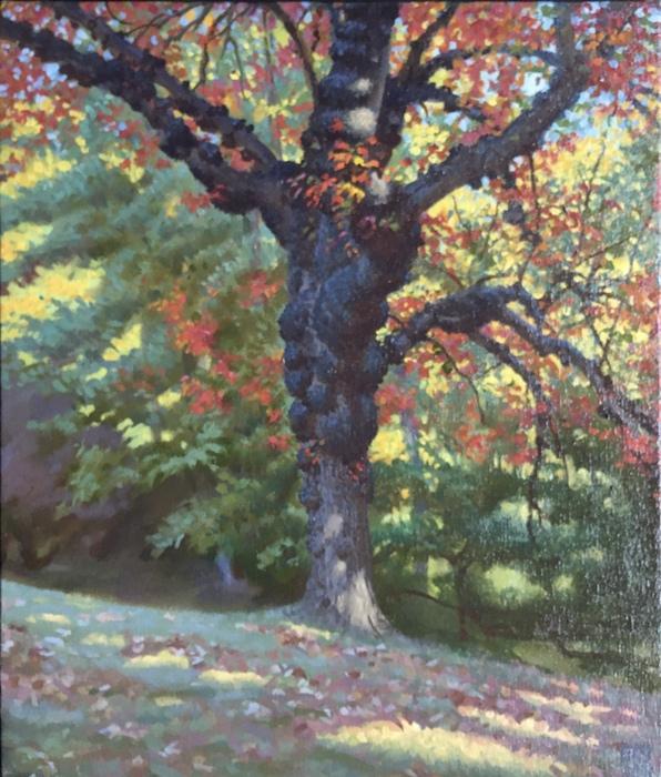 Gnarled Tree, Sunny