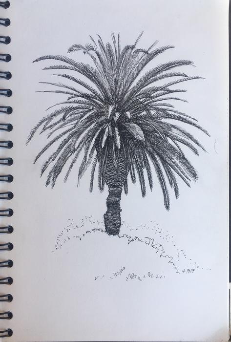 Claremont Palm