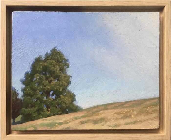 Tree on Larz Hill, Sunny